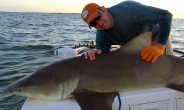 Miami Shark Fishing